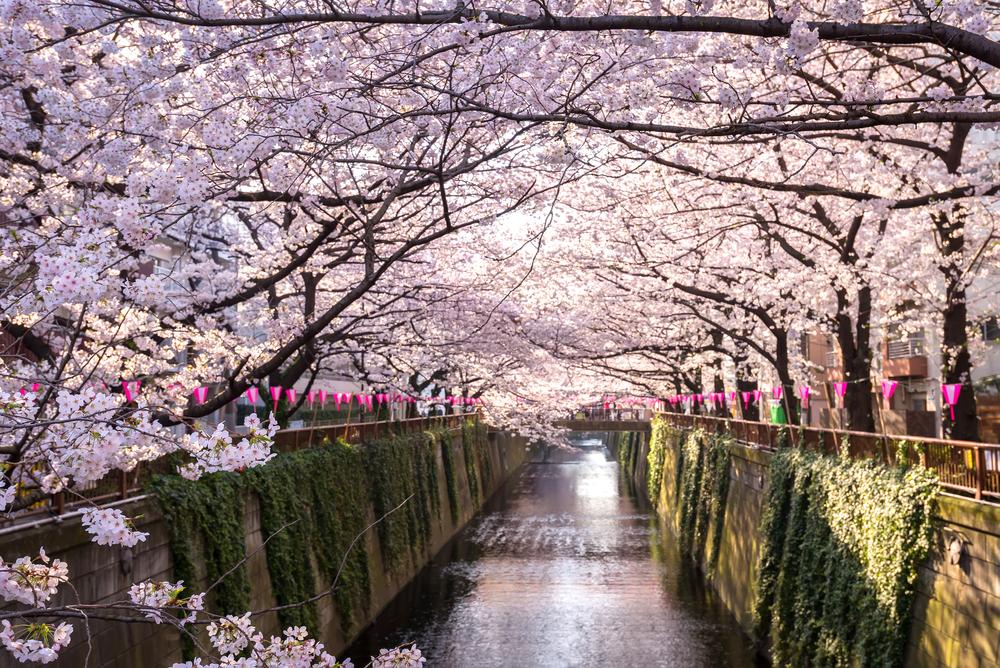 Tokio, todo un paraíso para las próximas Olimpiadas