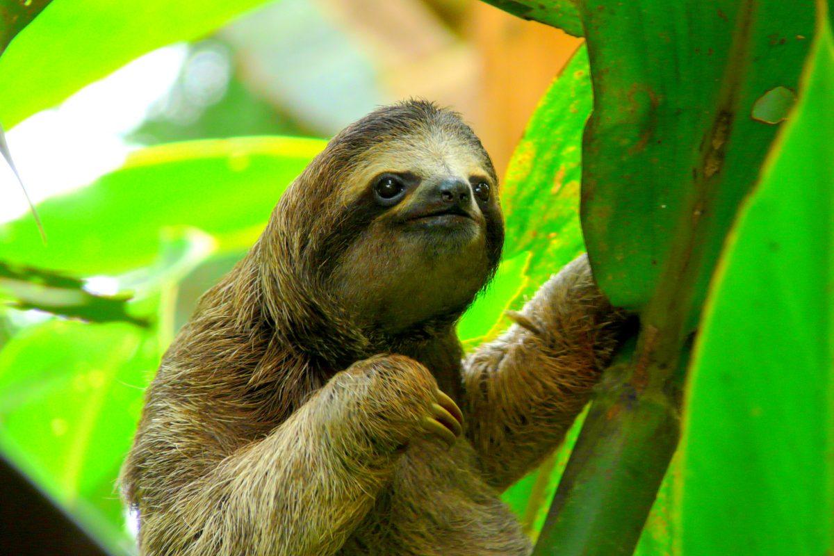 7 visitas imprescindibles en Costa Rica
