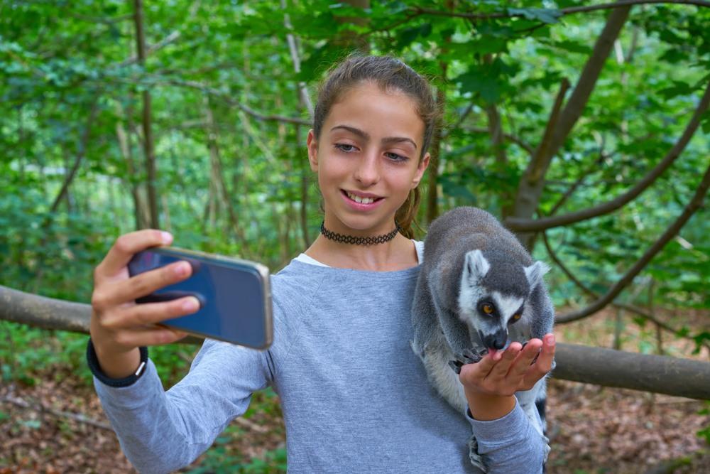 Dando de comer a un lemur