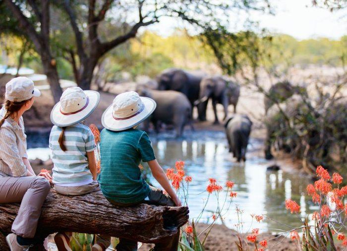 Tu aventura más épica en un safari por África