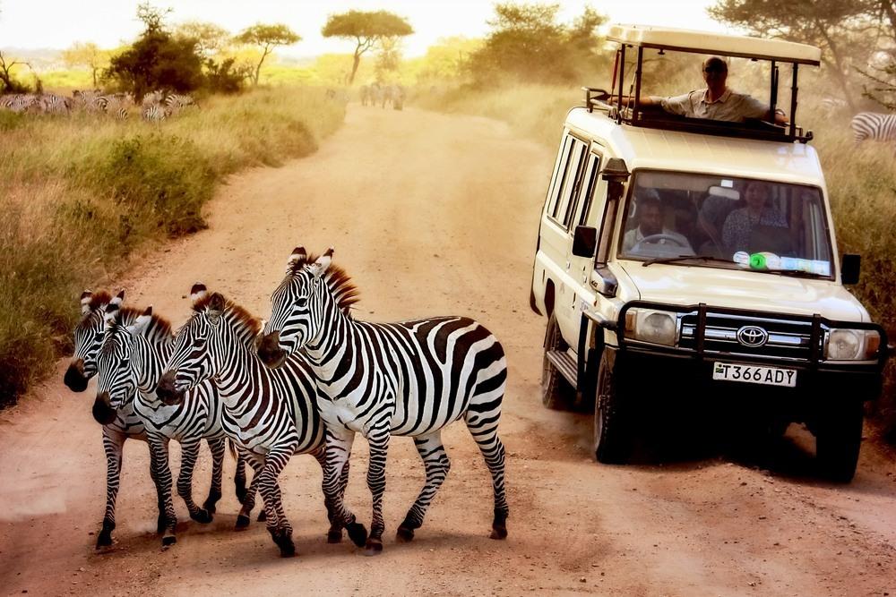 Cebras en el Parque Nacional del Serengeti
