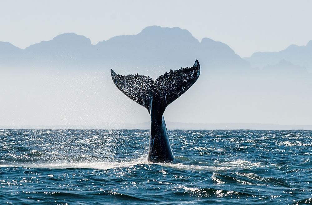 Evitar la contaminación marina