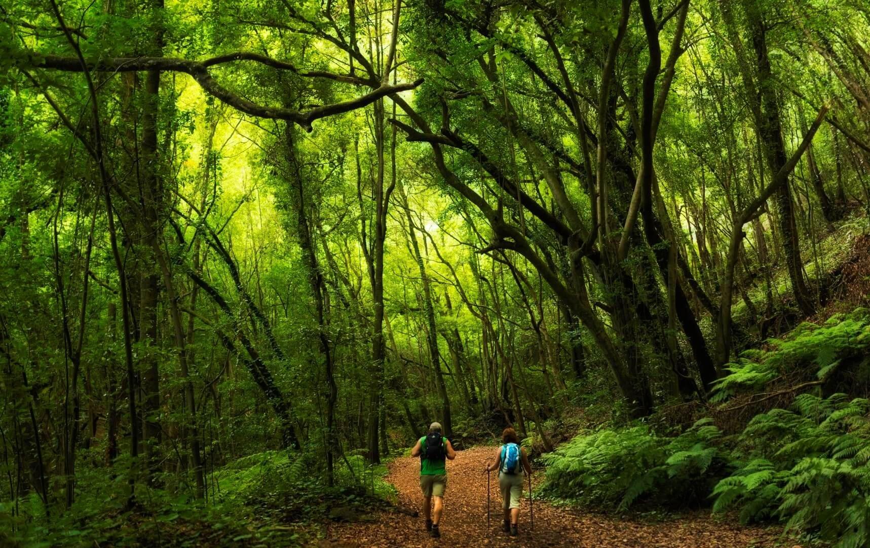 Senderistas por el bosque de Los Tilos
