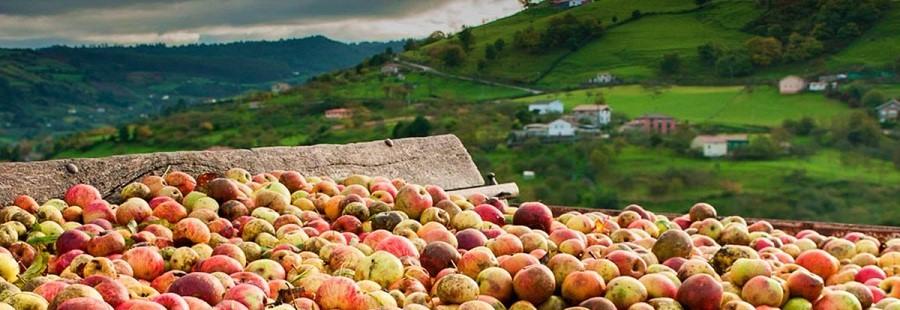 Descubre Asturias con la Ruta de la Manzana y la Sidra