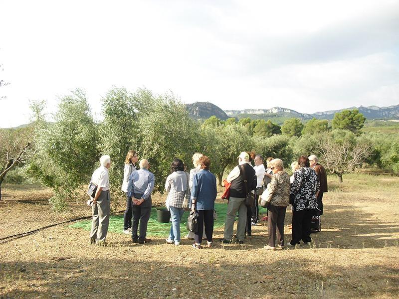Ruta explicativa por los olivares de Jaén