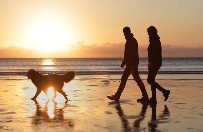 Descubre los mejores lugares para viajar con tu mascota
