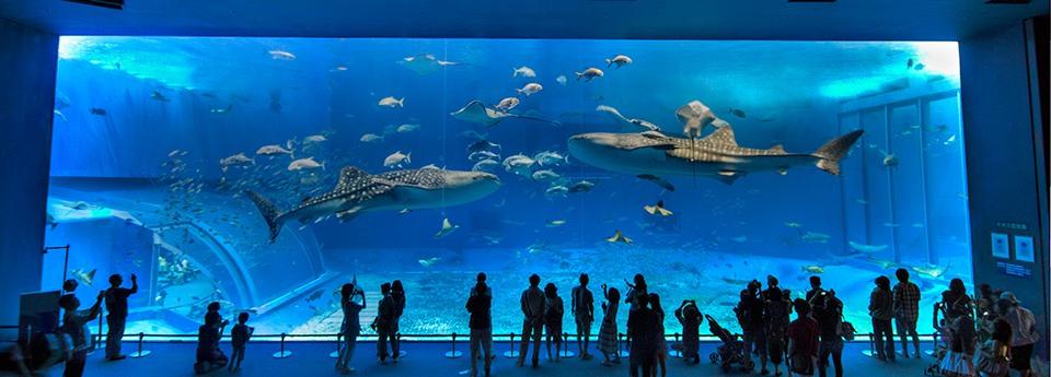 Descubre los oceanográficos más espectaculares que te dejarán boquiabierto