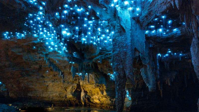Waitomo Glowworms