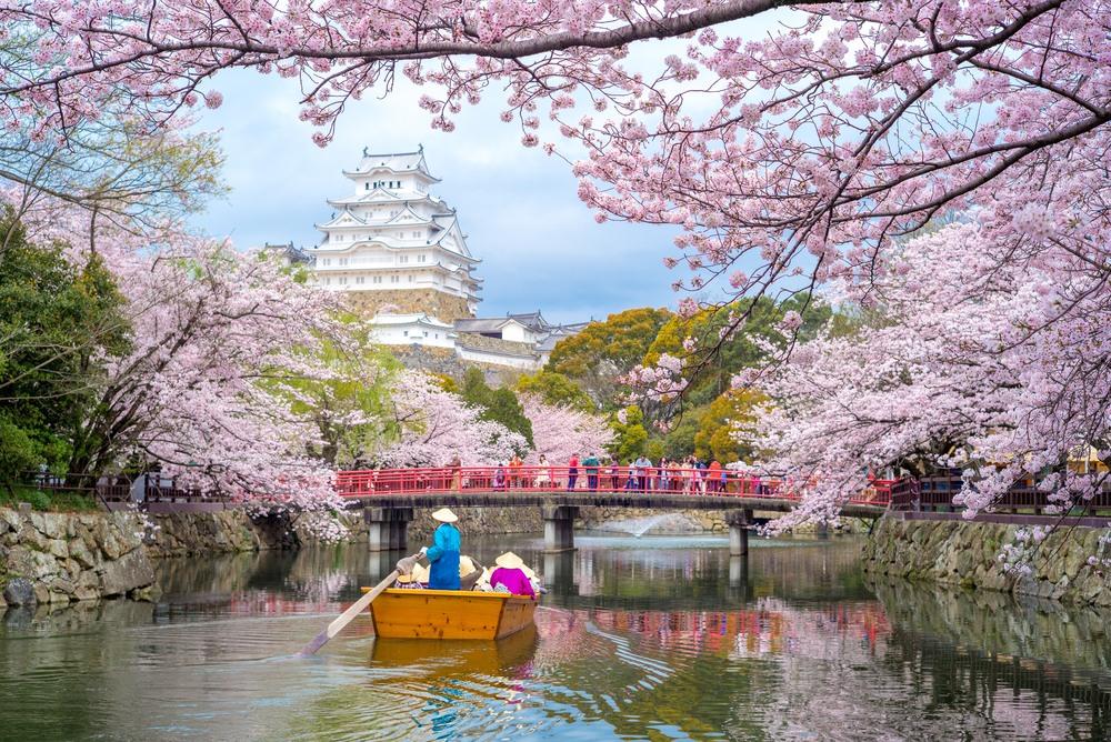 Almendros en Flor en Primavera, Japón