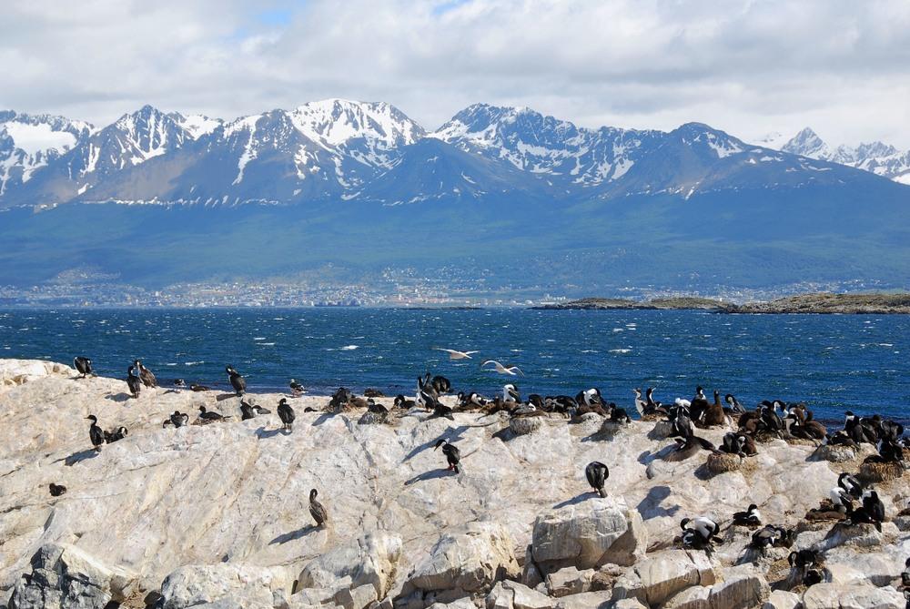 Salvajes pinguinos en Ushuaia