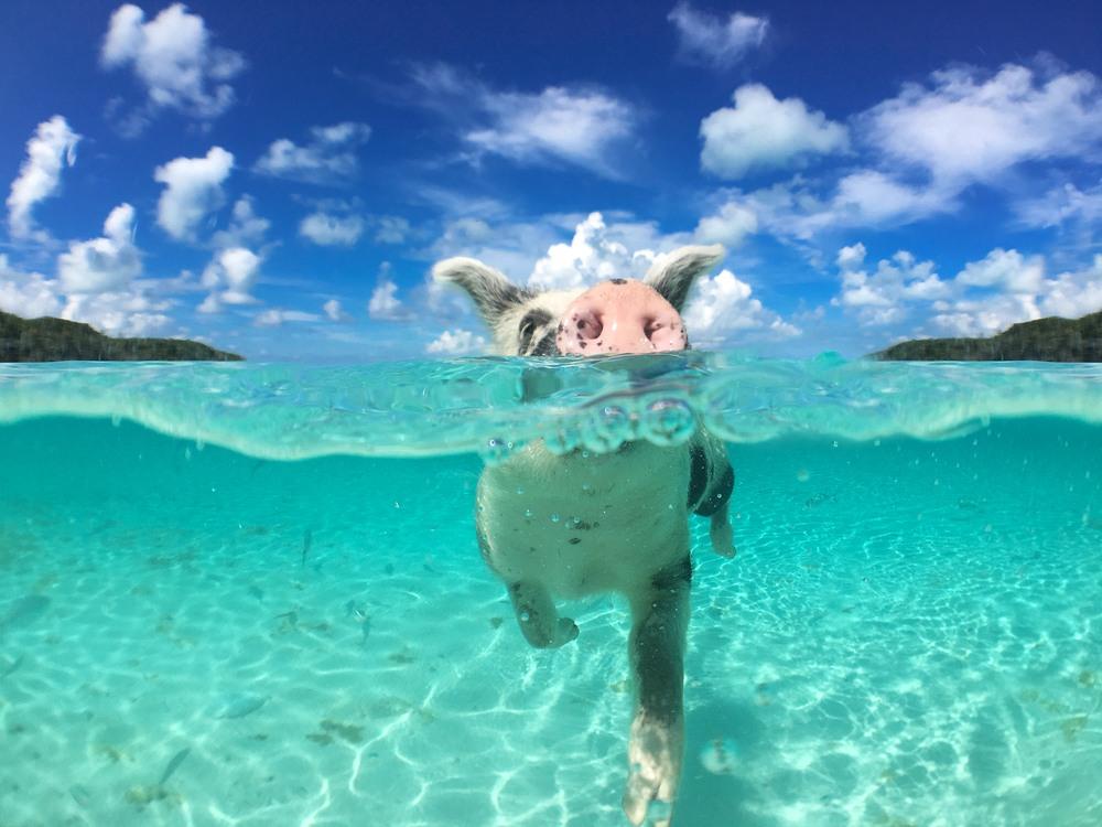 Las 7 mejores playas del Caribe